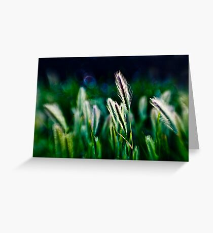 out of blur wheat Greeting Card