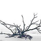 Driftwood Beach by Jennifer Bishop