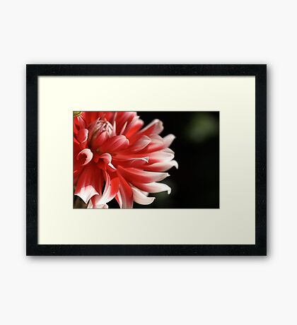 Dahlia Fun Framed Print