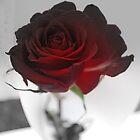 His Passion by Lozzar Flowers & Art