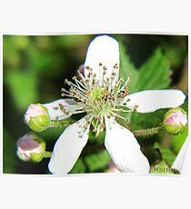 Spring Flower 11 Poster