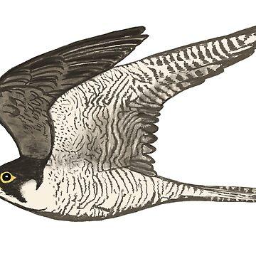 Peregrine Falcon Colored Pencil Art by shoshannahscrib