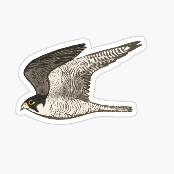 Peregrine Falcon Colored Pencil Art Sticker