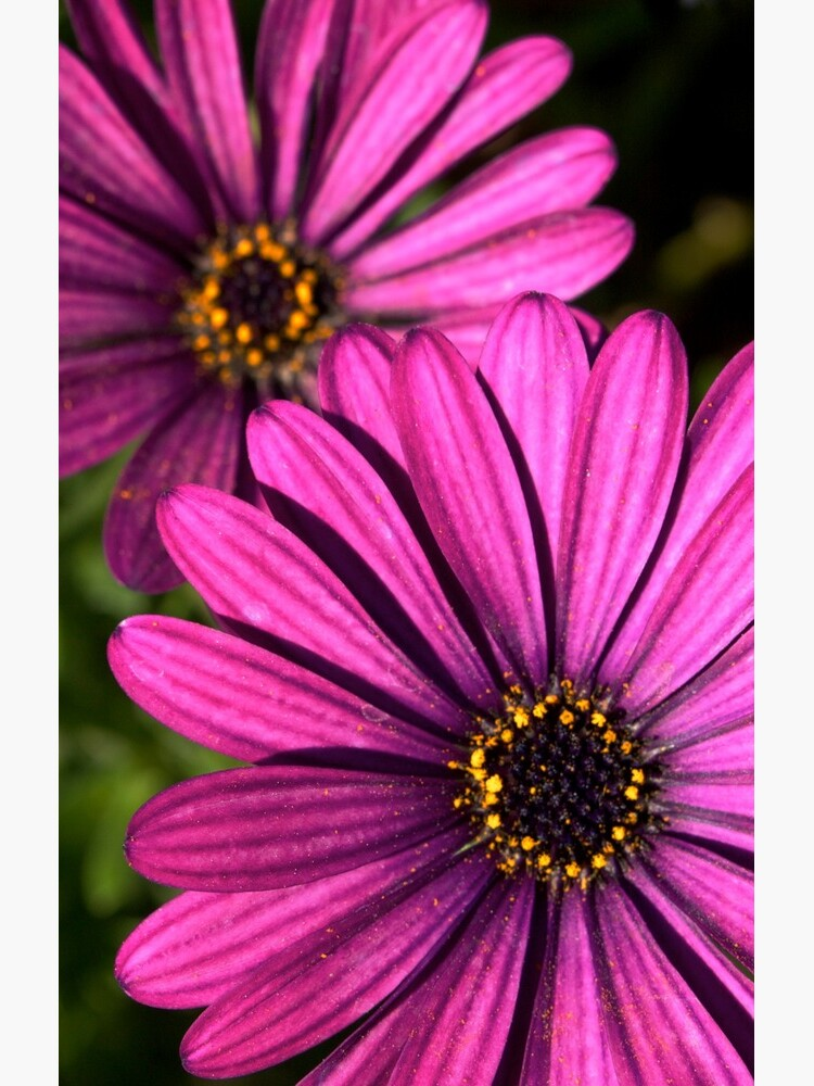Purple Explosion 2 by douglasewelch