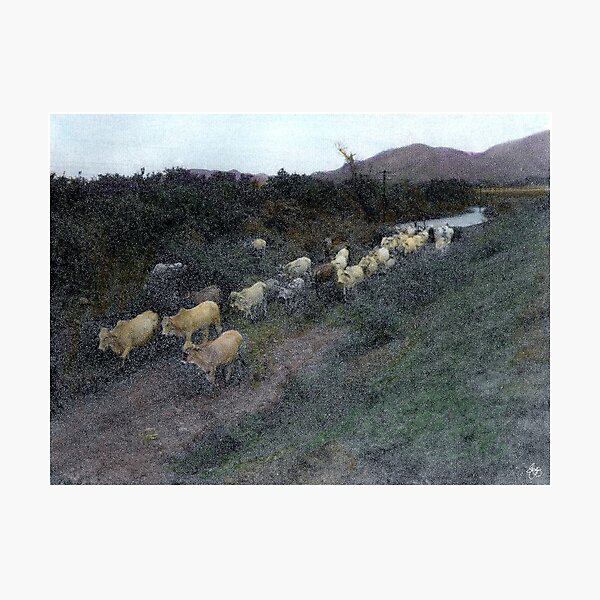 Painted Cattle Mexico Photographic Print