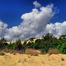 Sunny Dunes by Monnie Ryan
