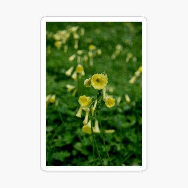 Spring Sour Grass Sticker