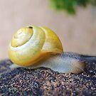 Yellow Snails Bring Joy  by CreativeEm