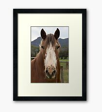 Rosie, the Clydesdale. Framed Print