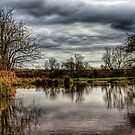 Pond on the Water Meadows - Winchester by NeilAlderney