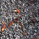 Galapagos Islands: Sand Made Completely of Shells by tpfmiller
