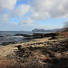 Galapagos Islands: Vegetation on Beach by tpfmiller
