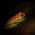 Peruvian Rainforest: Tree Frog by tpfmiller