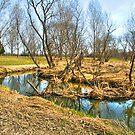 Meandering Creek by ECH52