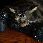 MY Camera, wink wink! by Heather Friedman