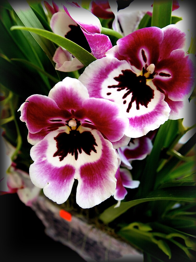 Orchids by douglasewelch