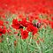 Remembrance Day - 11/11