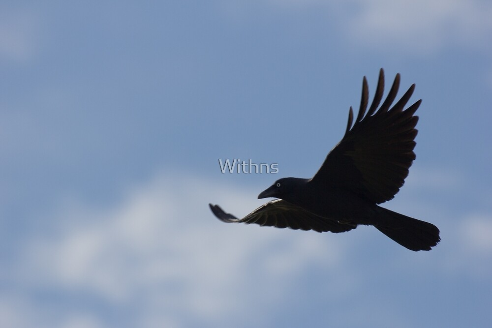 Black Bird Fly by Withns