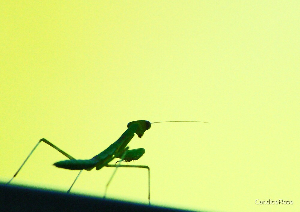 Mantis Zen Master by CandiceRose