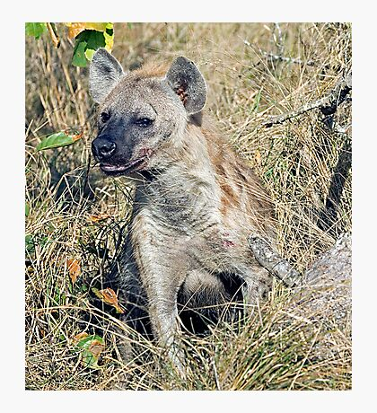 Hyena Photographic Print