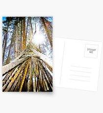 Tipi Postcards