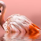 Flamingo-2010 by gemlenz