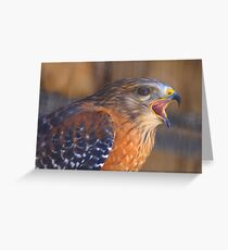 Red Shoulder Hawk Greeting Card