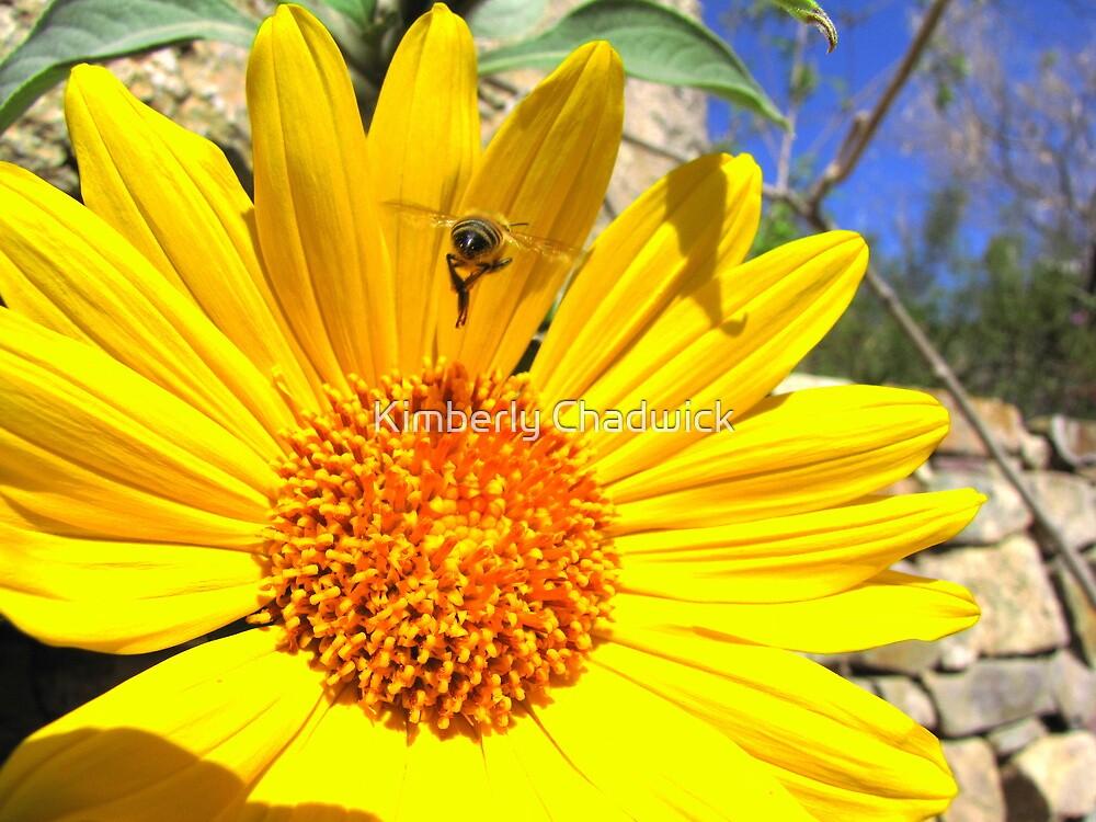 Pollination Series ~ 1 by Kimberly Chadwick