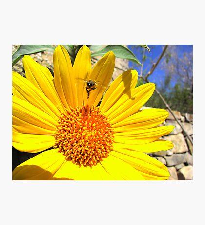 Pollination Series ~ 1 Photographic Print