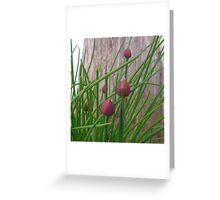Chive Blossoms Greeting Card