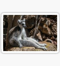 Lemur Meditation Sonnenbad Sticker