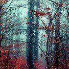 Dreaming On - Magical Forest Scene by Dirk Wuestenhagen