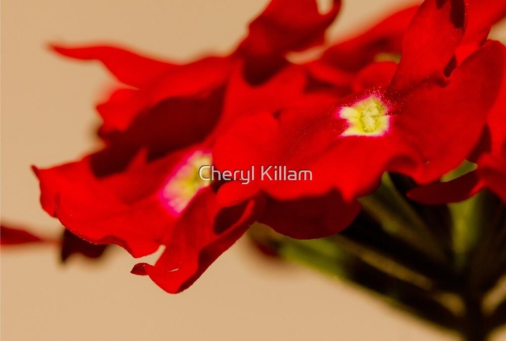 Red Flower by Cheryl Killam