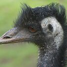 Old Man Emu by Clare101