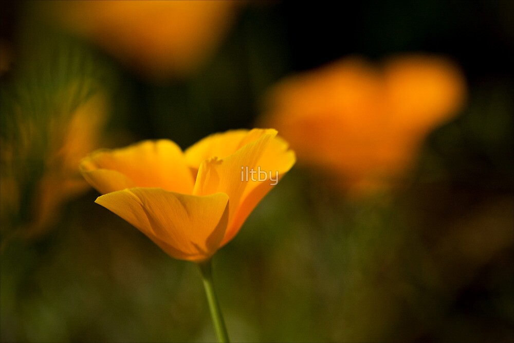 Tango by iltby