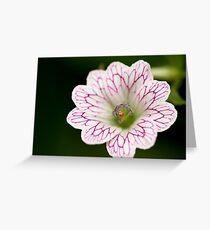Lifelines Greeting Card