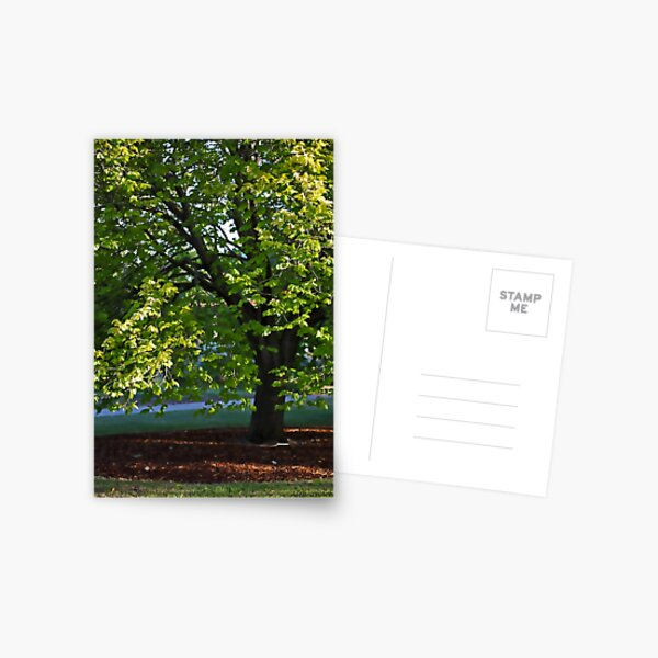 Elm Tree Postcard