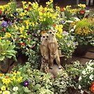 Meercats in the garden...... by supernan