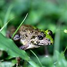 Bali Frog by Normf