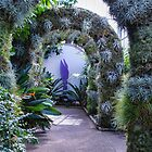 A Living Arch  by Marilyn Cornwell