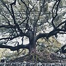 Old Japanese Tree In Kyoto by Guillaume Marcotte