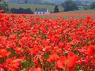 Local Poppy field, Shropshire, England by hjaynefoster