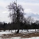 Tree and crows by Antanas
