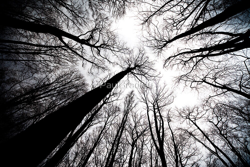 Trees (Abstract) by PaulBradley