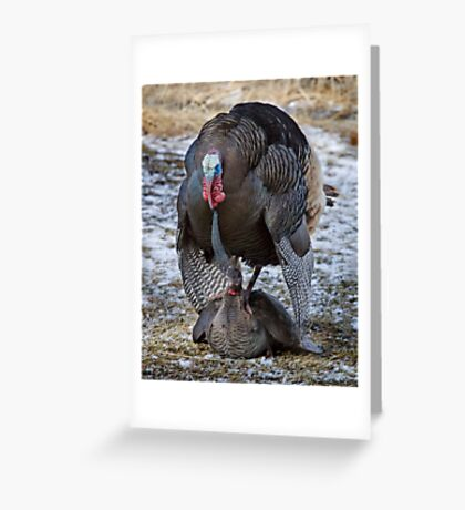Spring Fling, Wild Turkey Style Greeting Card