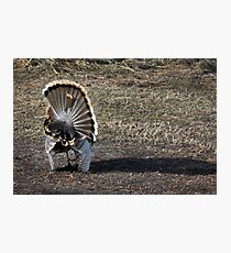Just Me and My Shadow, Wild Turkey Style Photographic Print
