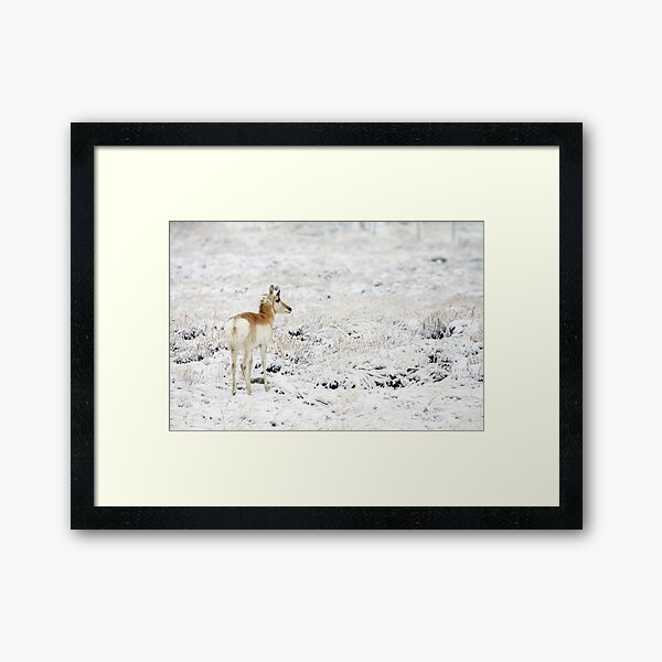 My High Key World Framed Art Print