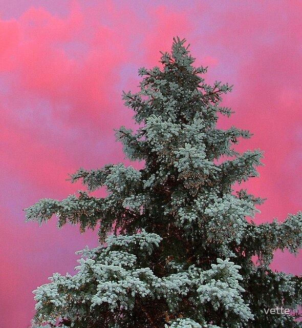 Sunset beauty by vette