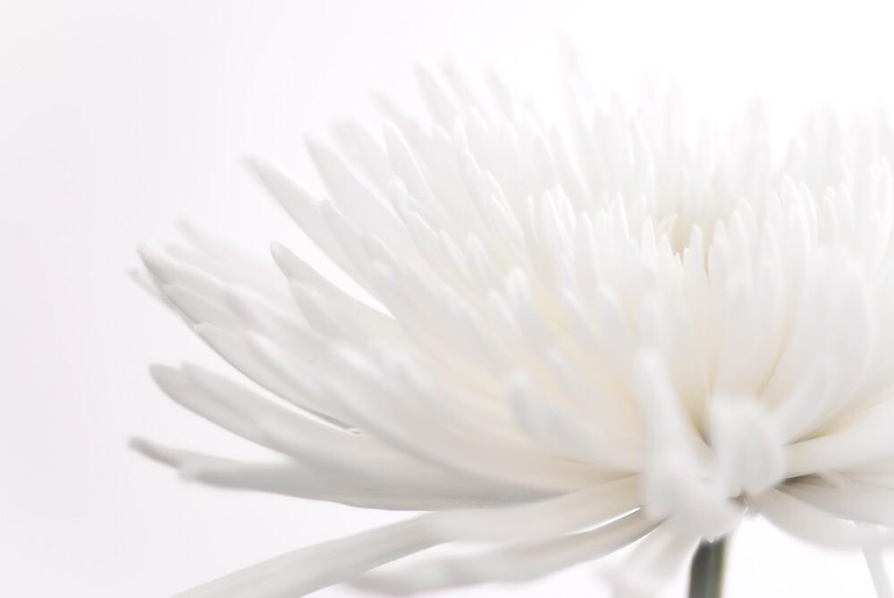 Creamy Fuji for Mums  by Johanne Brunet