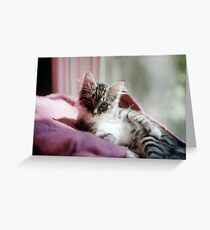 Smug Kitten Greeting Card